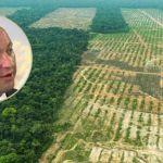 La Deforestación   - cover